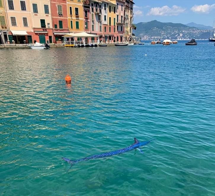Aguglia in mare, davanti a Portofino