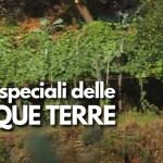 Cinque terre: i vini speciali della Liguria