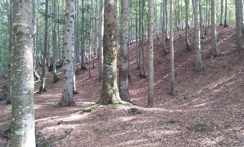 Monte Penna, boschi
