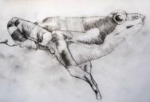 Ilustração Científica | Desenho