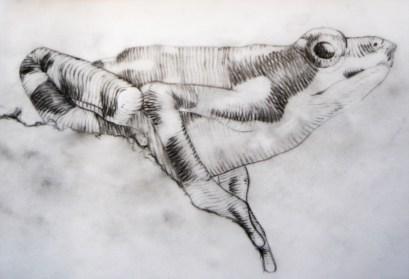 Ilustração Científica   Desenho