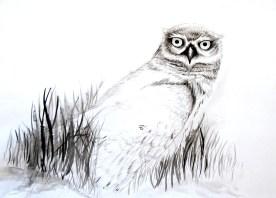 Desenho   Ana Gomes