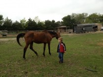 We liked the horses.