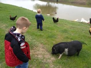 Piggies?