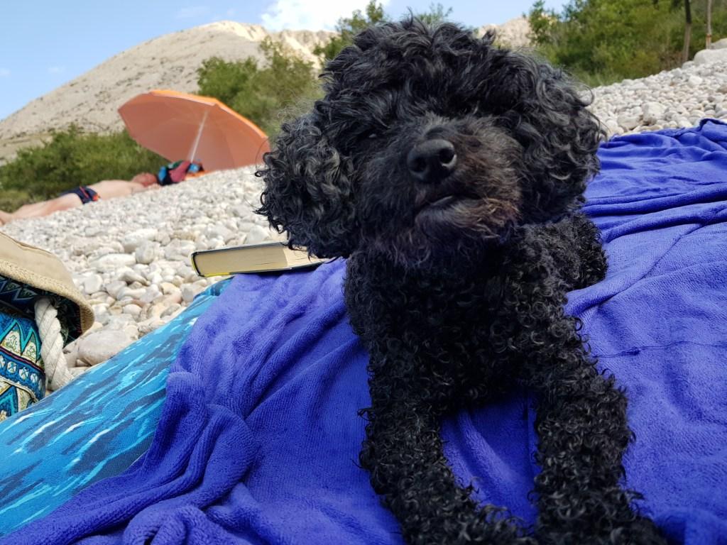 Cane in spiaggia in Croazia