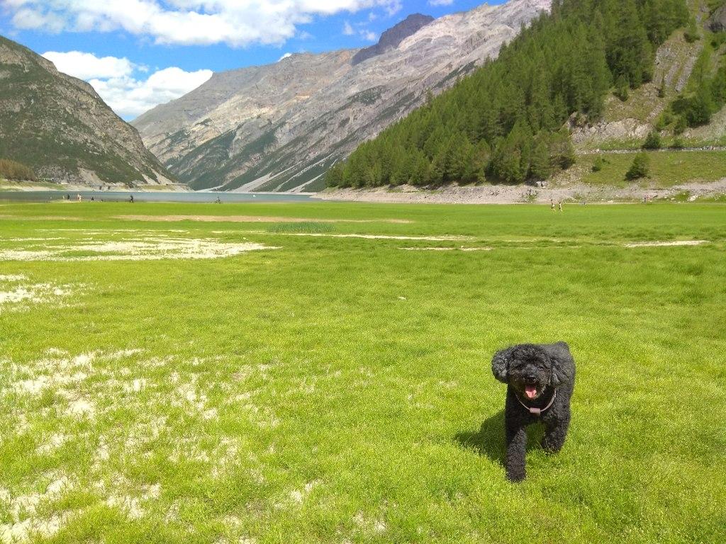 Dove andare in vacanza con il cane: lago di Livigno