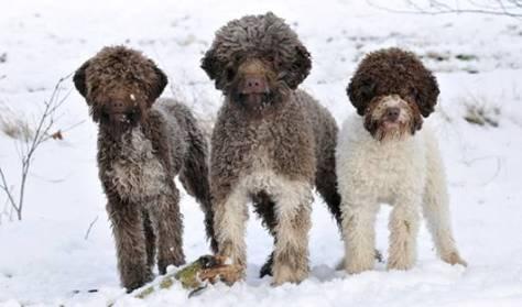 Truffle Dogs