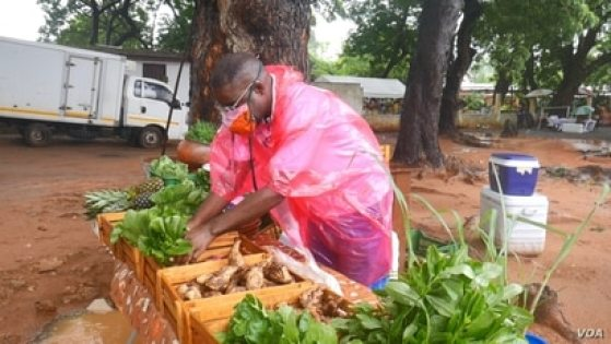 Kobina Hudson, is an organic farmer in Ghana. Before the PGS system, he had to explain to customers his organic practices, July 4, 2020. (Stacey Knott/VOA)
