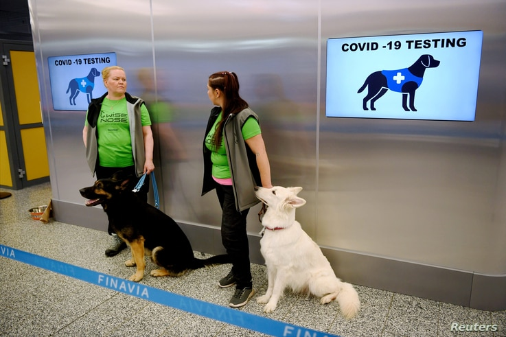 Sniffer dogs Valo (L) and E.T., who are trained to detect the coronavirus disease (COVID-19) from the arriving passengers…