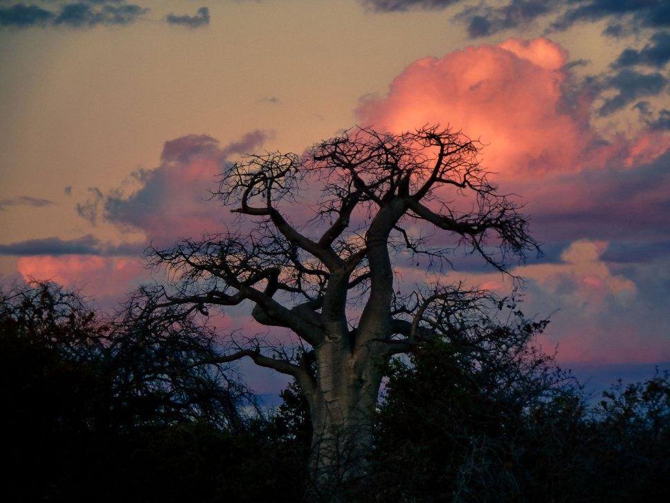 zimbabwe-1060548
