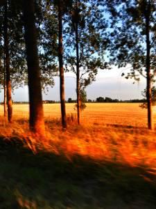 felder_sunset