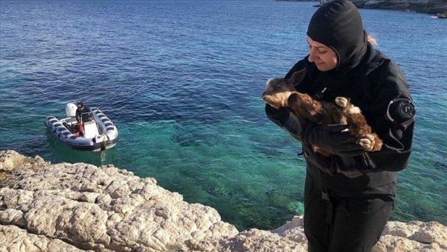 Adada yaşayan engelli oğlak, dalgıçların çabasıyla tedavi altına alındı