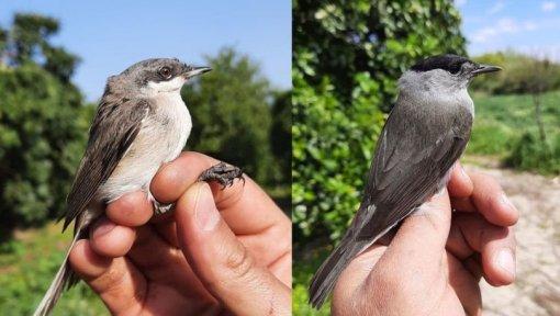 Serik'te halkalanan kuş, 4 yıl 14 gün sonra yeniden görüldü