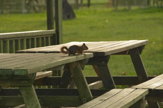Kütahya'da boş kalan parkta yaşayan sincaplar sakinliğin keyfini çıkardı