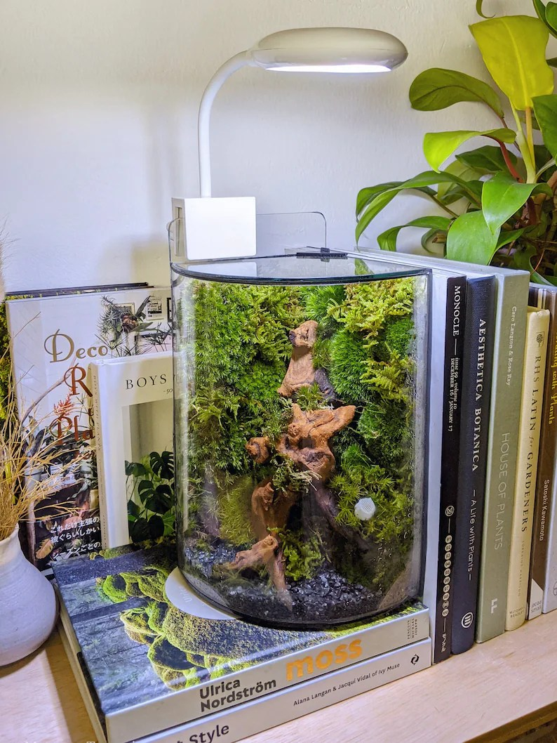 Qrvy QC Glass Terrarium Case image 0