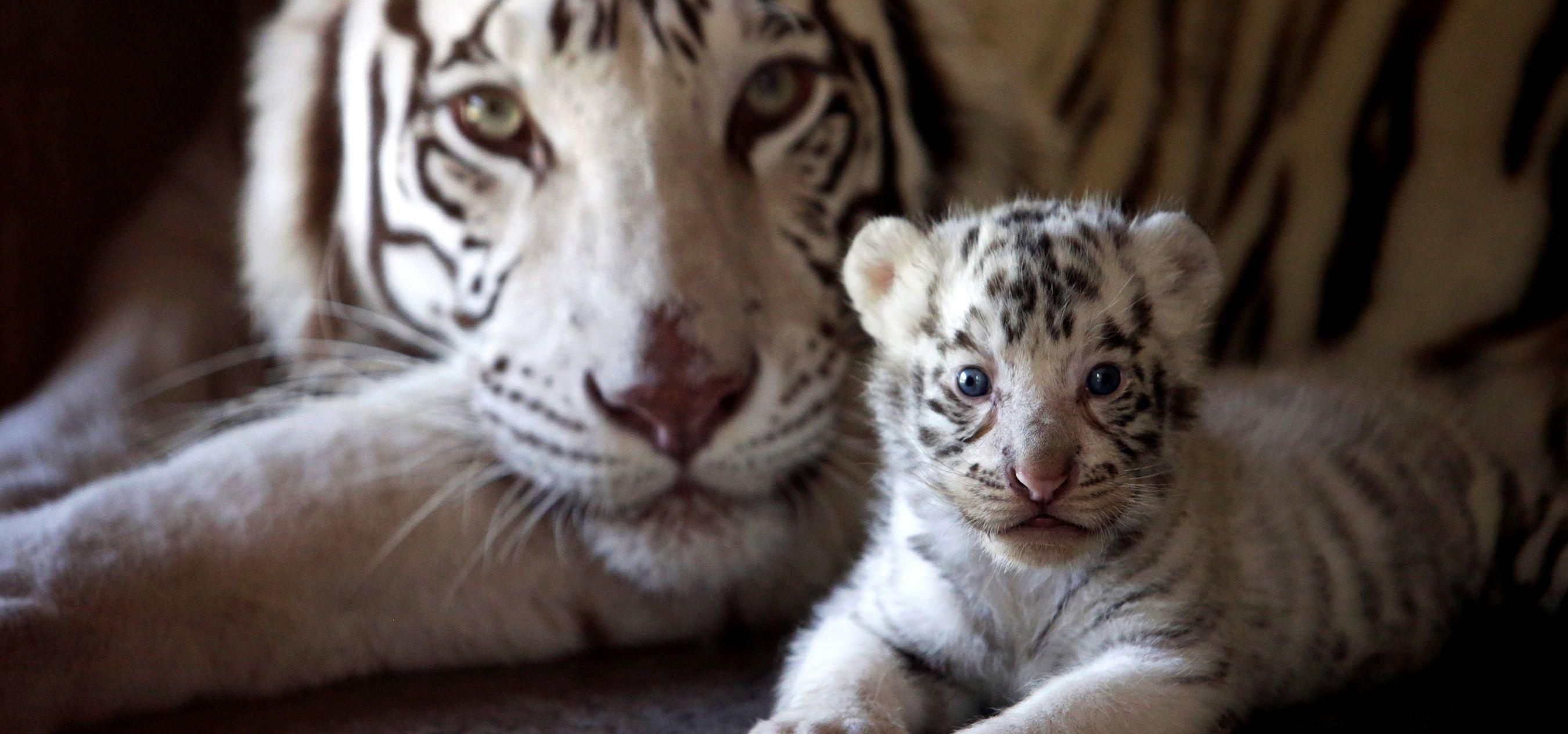Animal Mothers And Babies 21 Amazing Pictures From Animal