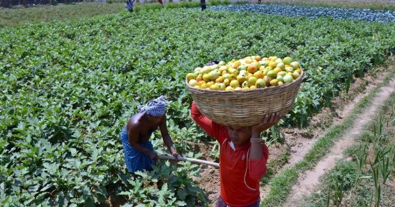 school farming