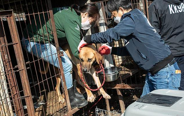 The animal rights groups - Humane Society International/Korea, LIFE, KoreanK9Rescue, and Yongin Animal Care Association - worked closely with local authorities to remove the dogs so the structures could be demolished.