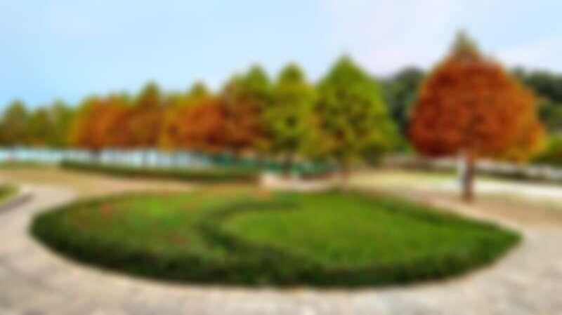 秋天限定美景落羽松、楓葉來了!盤點南投4大夢幻秘境。唯美楓紅、金黃水杉浪漫破表 | Marie Claire 美麗佳人
