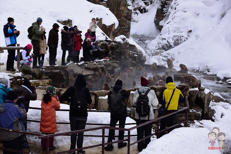 日本長野|地獄谷野猿公苑!冬季必訪,來看雪猴泡溫泉