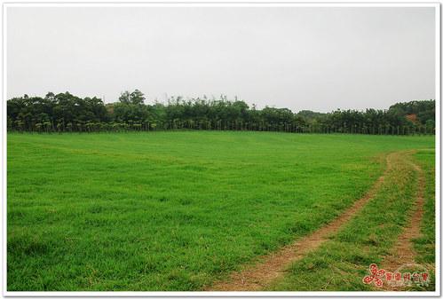 新竹景點|青青草原