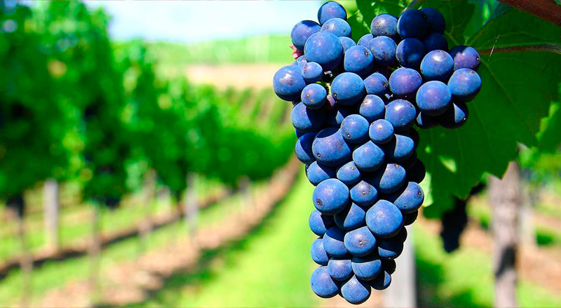 Envoltura con Vino