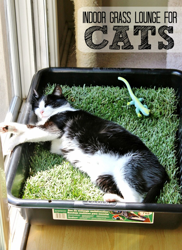 indoor-grass-lounge-for-cats