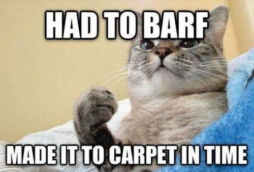 snarky cat meme