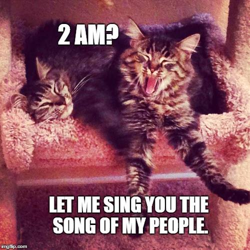 sleeping cat memes