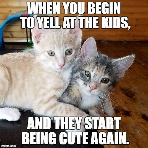 sassy cat memes