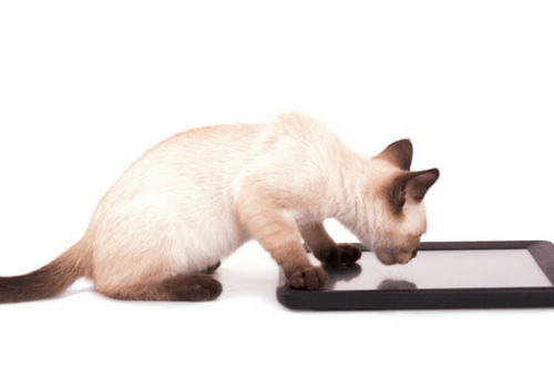 Apps for Your Cat