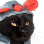 Cute Halloween Costumes For Cats
