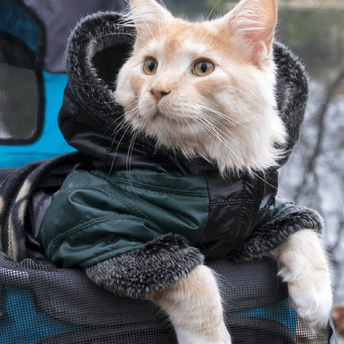 cat travel accessories