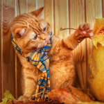 Cat Themed Home Decor cat decor