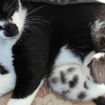 fun facts about kittens