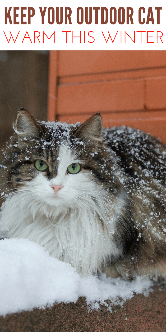 Keep Outside Cats Warm During Winter cat in winter