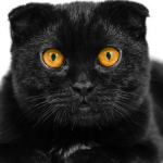 #CrazyCatLady #BlackCatNames #CatLover