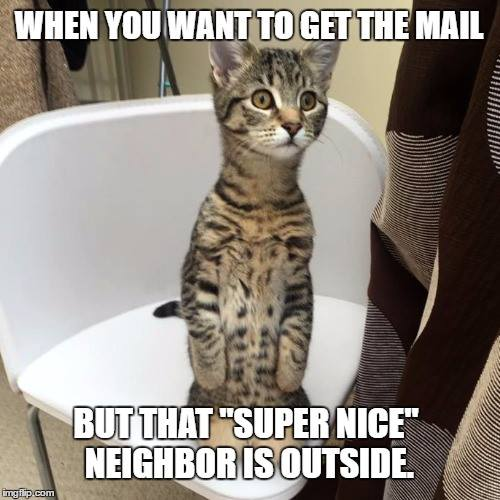 #CrazyCatLady #CatLover #CatMemes