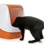 #CrazyCatLady #CatCare #CatBox