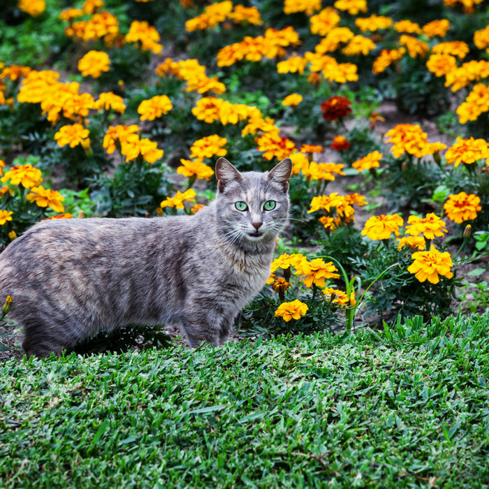#CatCare #CrazyCatLady #GardeningWithCats  how to keep cats out of flower beds
