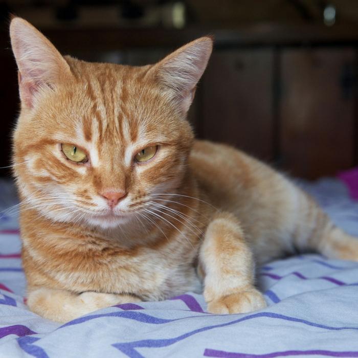 #CrazyCatLady #CatCancer #CatCare cat skin cancer facts