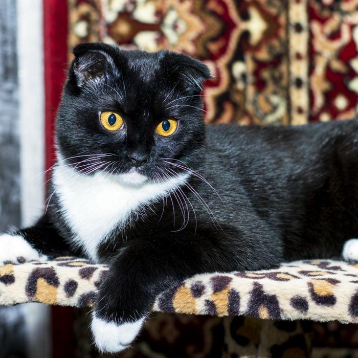 #CrazyCatLady #HouseCat #CatCare  house cat happy