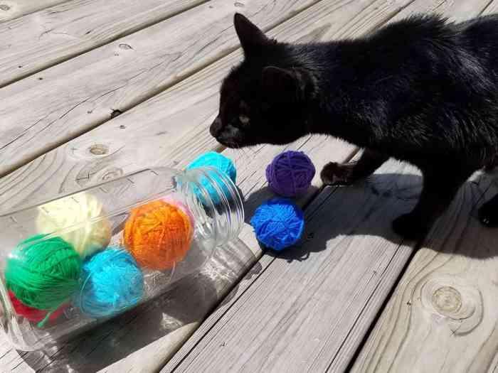 Homemade Cat Treats - Easy Cat Toy - Baby Saver