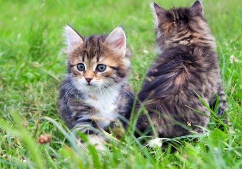 #CrazyCatLady #CatTreatsForKittens #KittyTips