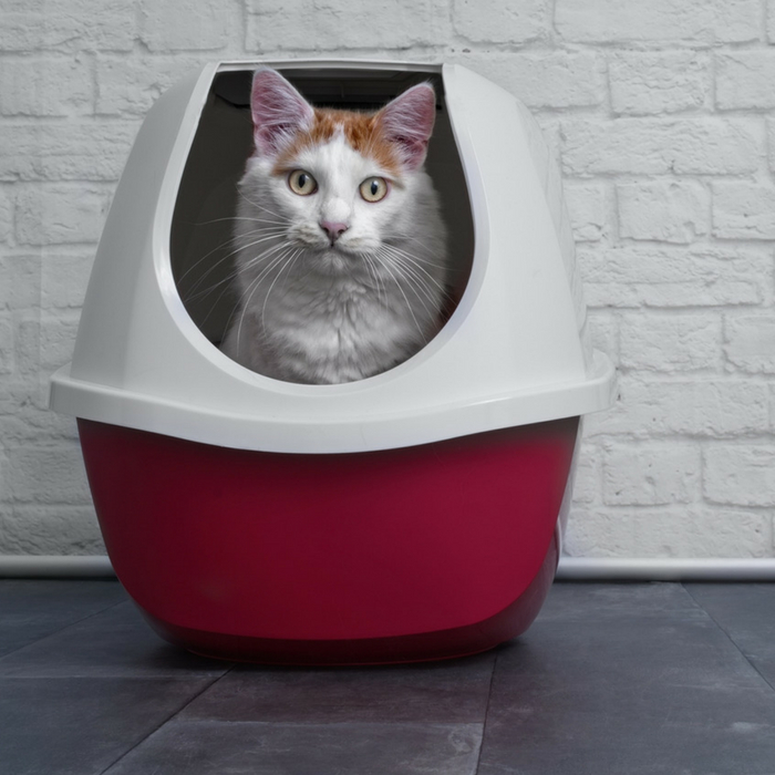 cats poop outside the litter box