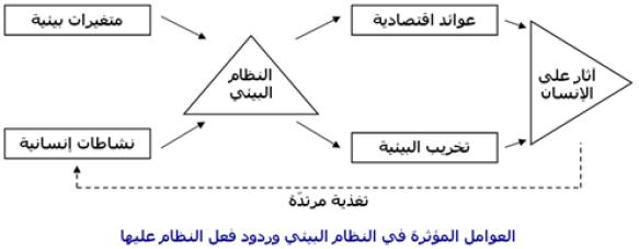 تصميم مخطط يبين العلاقه بين مكونات البيئه والعوامل التي تؤثر فيها.كلام نيوز