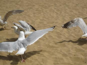 The seagulls are huge and particularly aggressive when it comes to lunch-time.