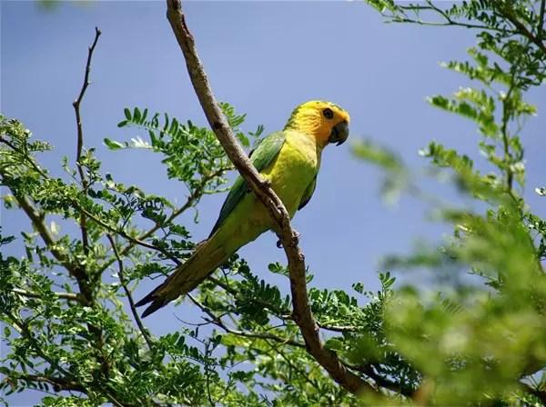 Nature Animaux Oiseaux Perruche
