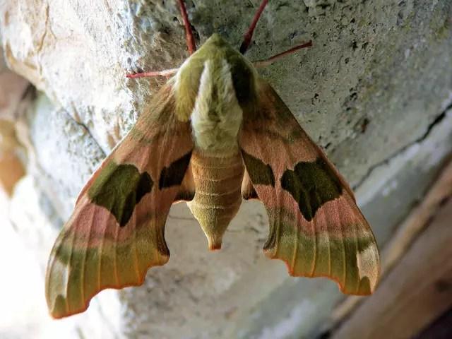 Papillon De Nuit Par Raymond ROCHETTE Sur LInternaute