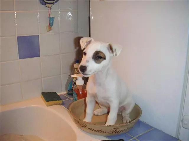 Bebe chien par jean philippe rathier sur LInternaute